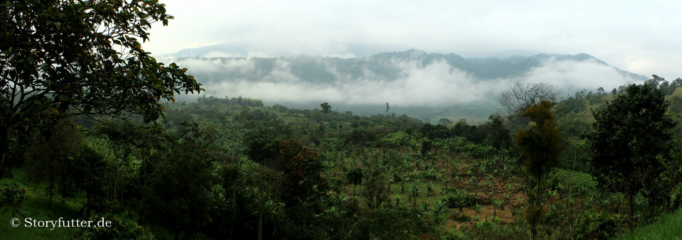 Nebelwald in Ecuador