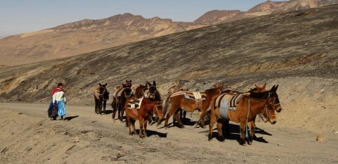 Bolivien: Packesel auf dem Choro-Trek