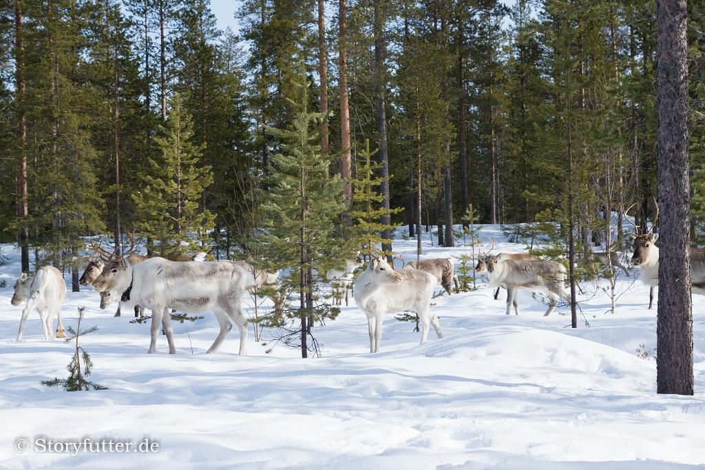 Lappland: Samí