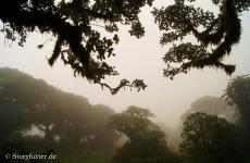 Flechten und Moose kämmen Wasser aus der Nebelwand